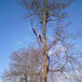 Tree Surgery & Pruning