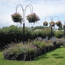 Basket Trees with base