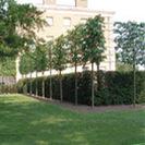 Screening Trees
